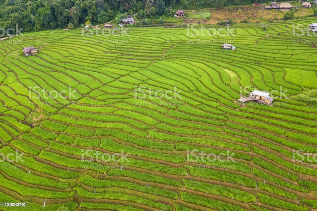 Aerial views of Small house and rice terraces field at pabongpaing...
