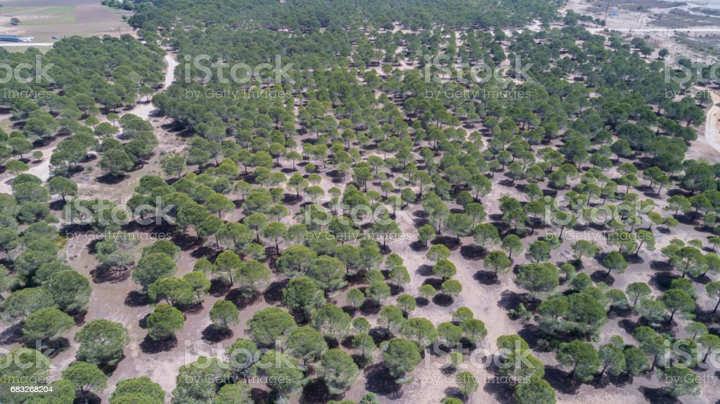Aerial wiew with drone, forest top view foto de stock royalty-free
