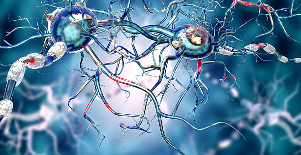 Affected Nerve cells, concept for Neurological Diseases,tumors,brain surgery. – Foto