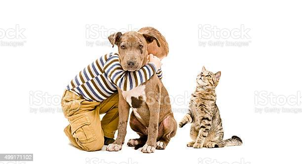 Affectionate boy pit bull puppy and a cat picture id499171102?b=1&k=6&m=499171102&s=612x612&h=zgzhgx3mlgdfp8n 70pgi1bcaxpgmbaxlznngzhnij4=