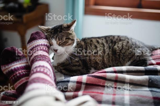 Affectionate cat picture id1132331817?b=1&k=6&m=1132331817&s=612x612&h=vrk7jak17lkemudzx2yyozrwz9eea5pqicsnjwvexgi=