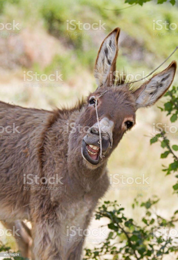 Affectionate donkey - foto stock