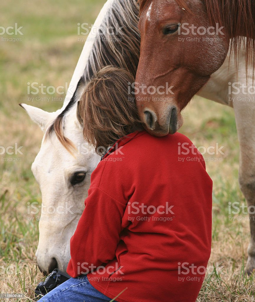 Affectionate Horses royalty-free stock photo