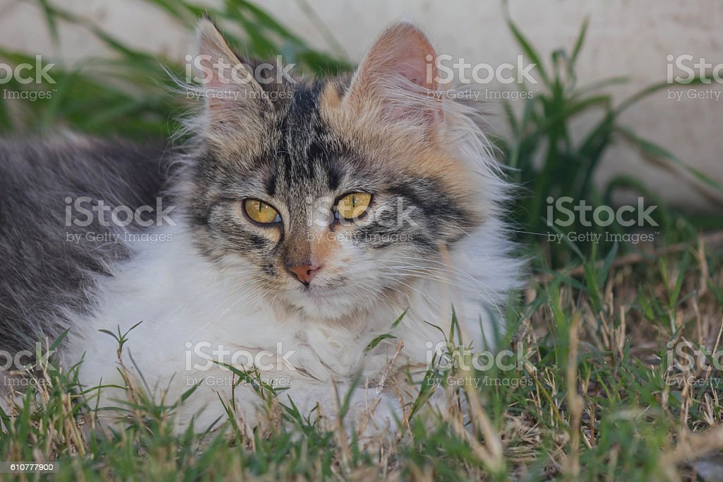 Affectionate sweet kitty look stock photo