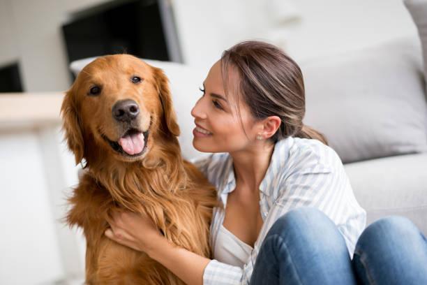 femme affectueuse, caressant son chien à la maison - femme seule s'enlacer photos et images de collection