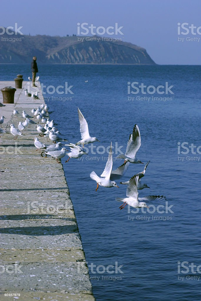 Affraid seagulls royalty-free stock photo