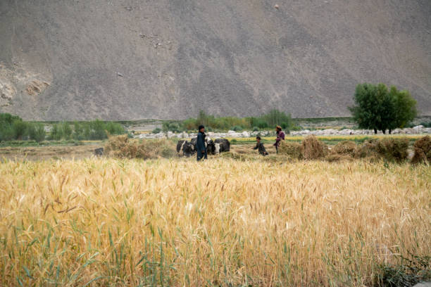 Afghani man in Wakhan Corridor, Afghanistan stock photo