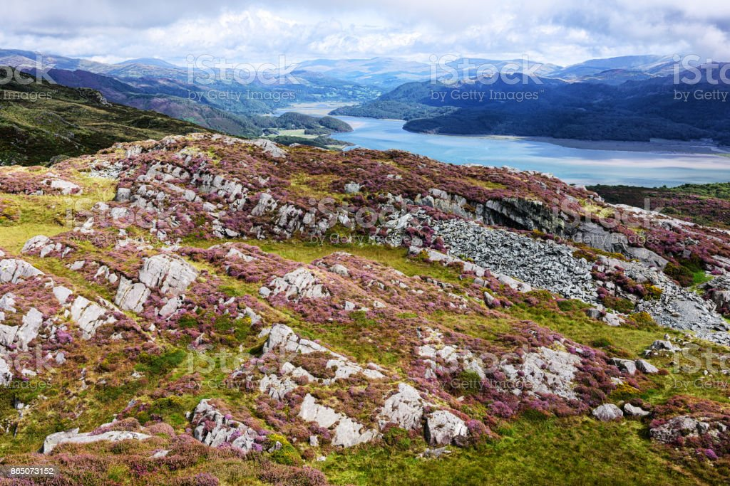Afon Mawddach, Rocks and Heather, Wales stock photo