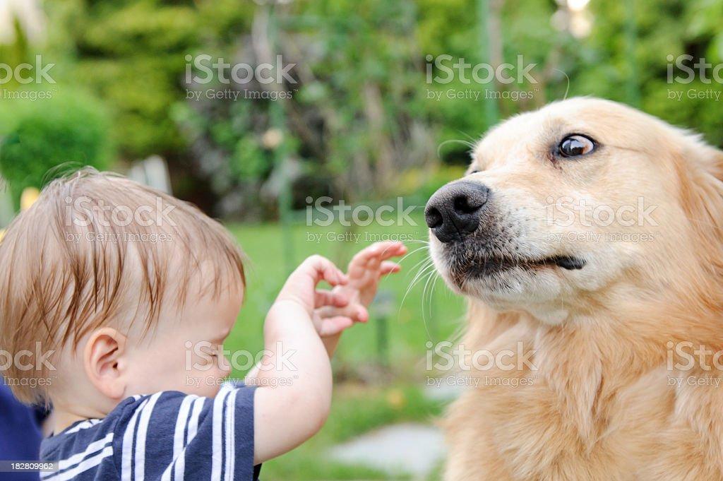 Angst der Hund – Foto