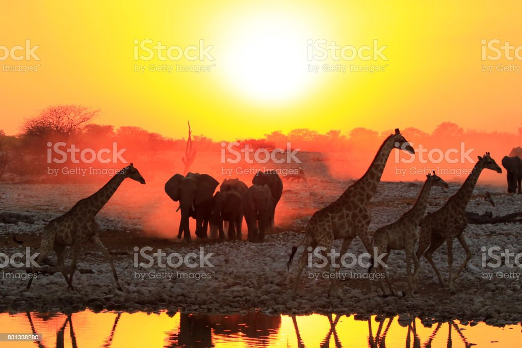 Africa big5 elephants giraffes sunset sunrise sky wildlife safari waterhole stock photo