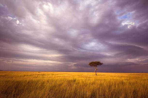 paesaggio africano - pianura foto e immagini stock
