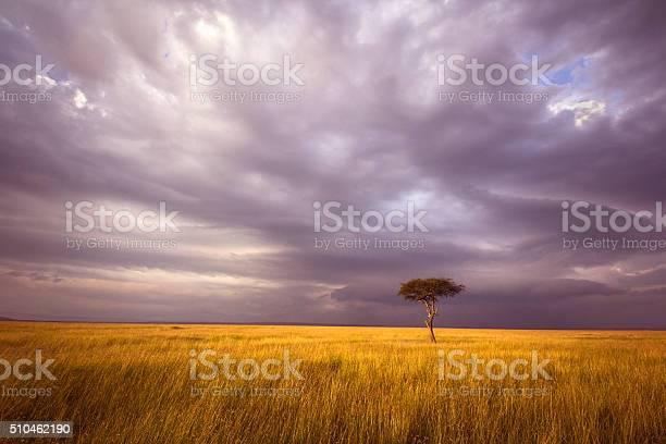 Photo of Africa landscape