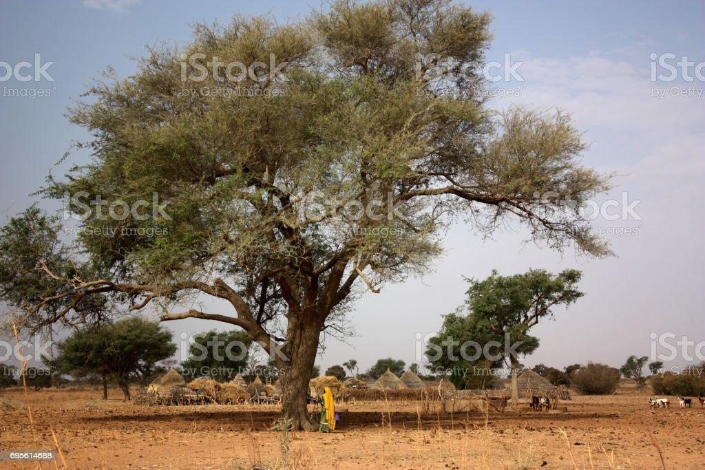 africa landscape stock photo