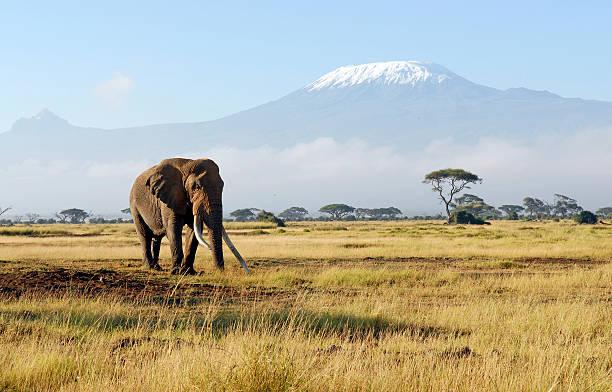 africa - single pampas grass bildbanksfoton och bilder
