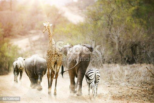 istock Africa Safari Animals Walking Down Path 637086466