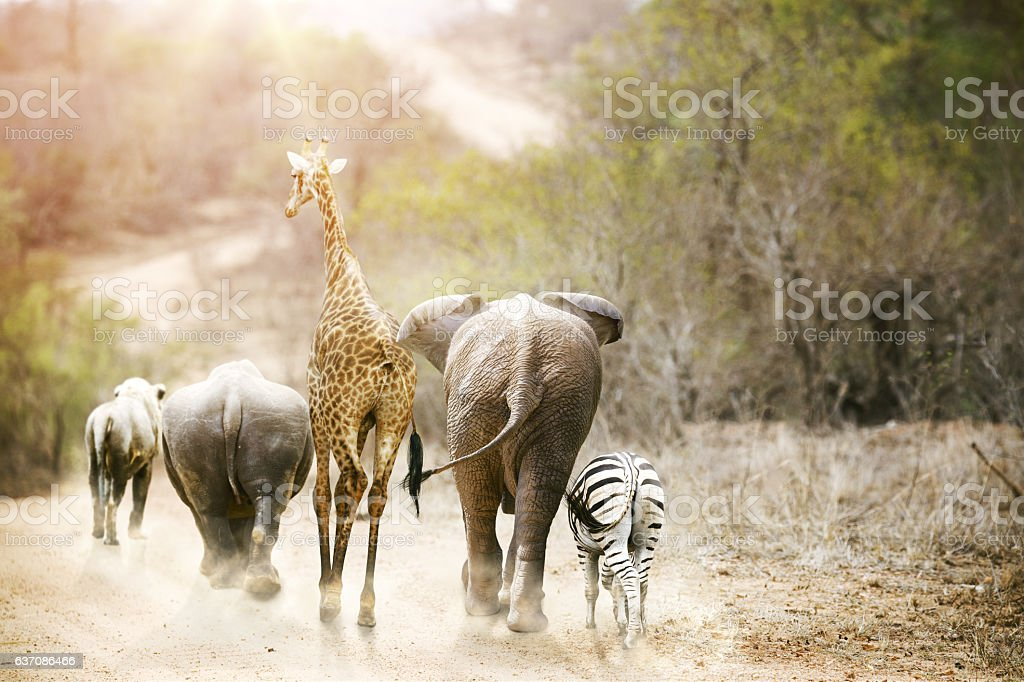 Africa Safari Animals Walking Down Path stock photo