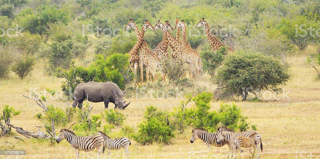 Africa Savannah with Big Mammals stock photo