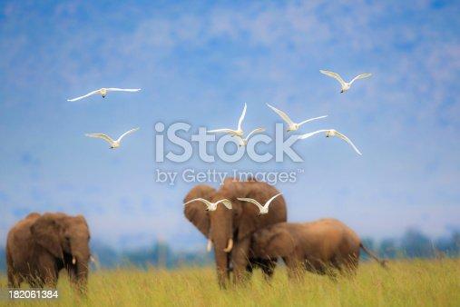 istock Africa Scenic 182061384