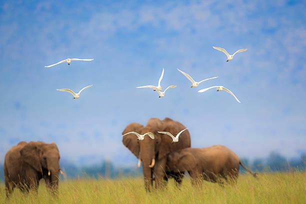 Africa Scenic stock photo