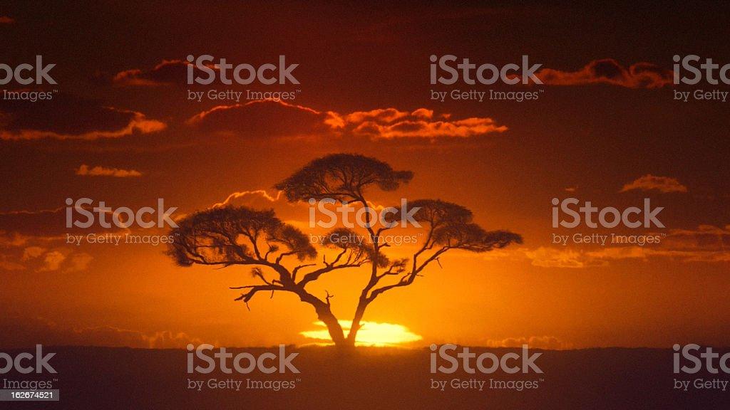 Africa. Sun inferior mirage. African timelapse sunrise. Acacia tree. stock photo