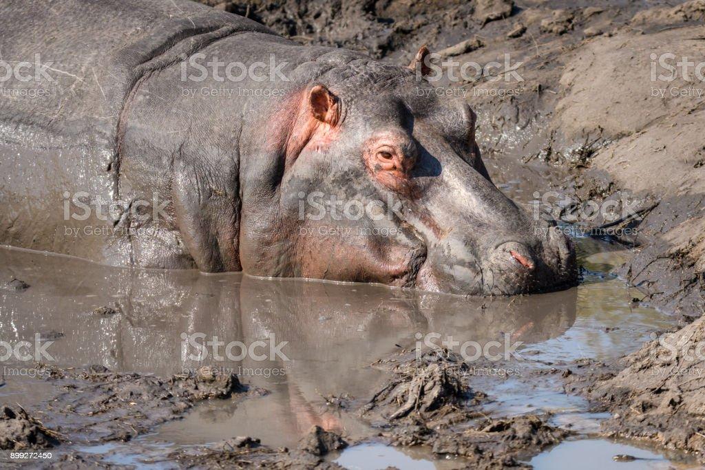 African adventure stock photo