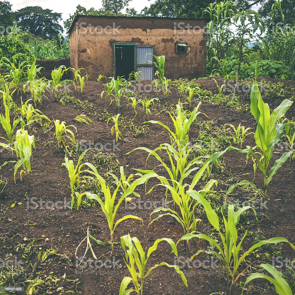 African agricultural land. royalty-free stock photo