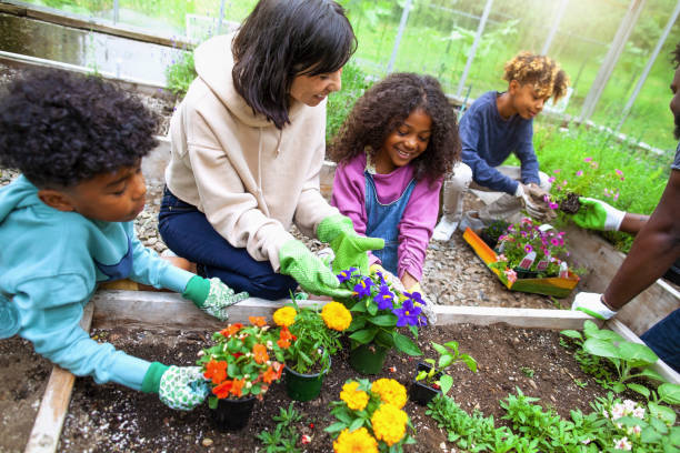 African American family with three kids working at community garden greenery stock photo