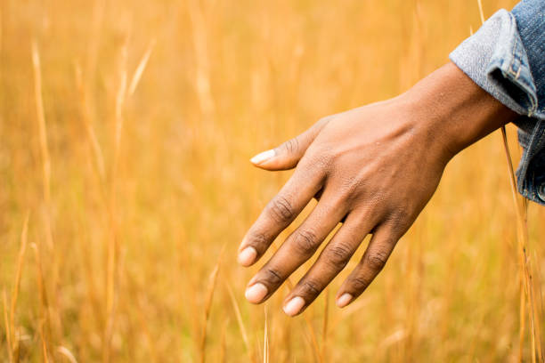 African American hand touching the grass of a meadow stock photo
