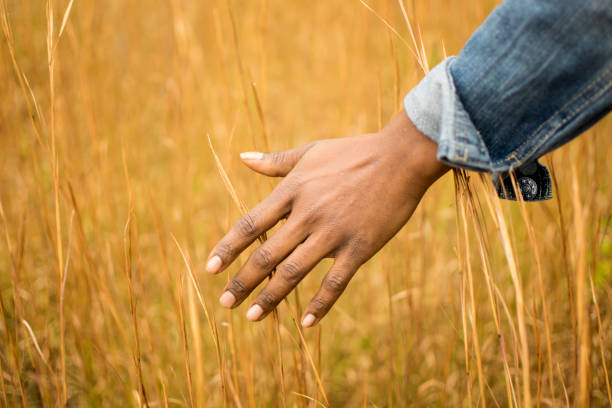 African American hand touching the tips of grass within a meadow stock photo