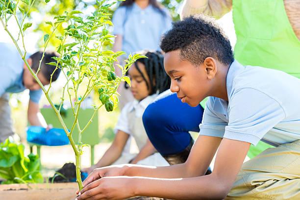 afro-americano rapaz plantação de produtos hortícolas, plantas na aula de ciências - teacher school solo imagens e fotografias de stock