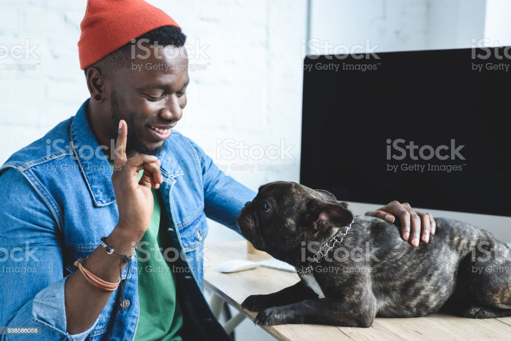 African american man blaming Frenchie dog on table by computer stock photo