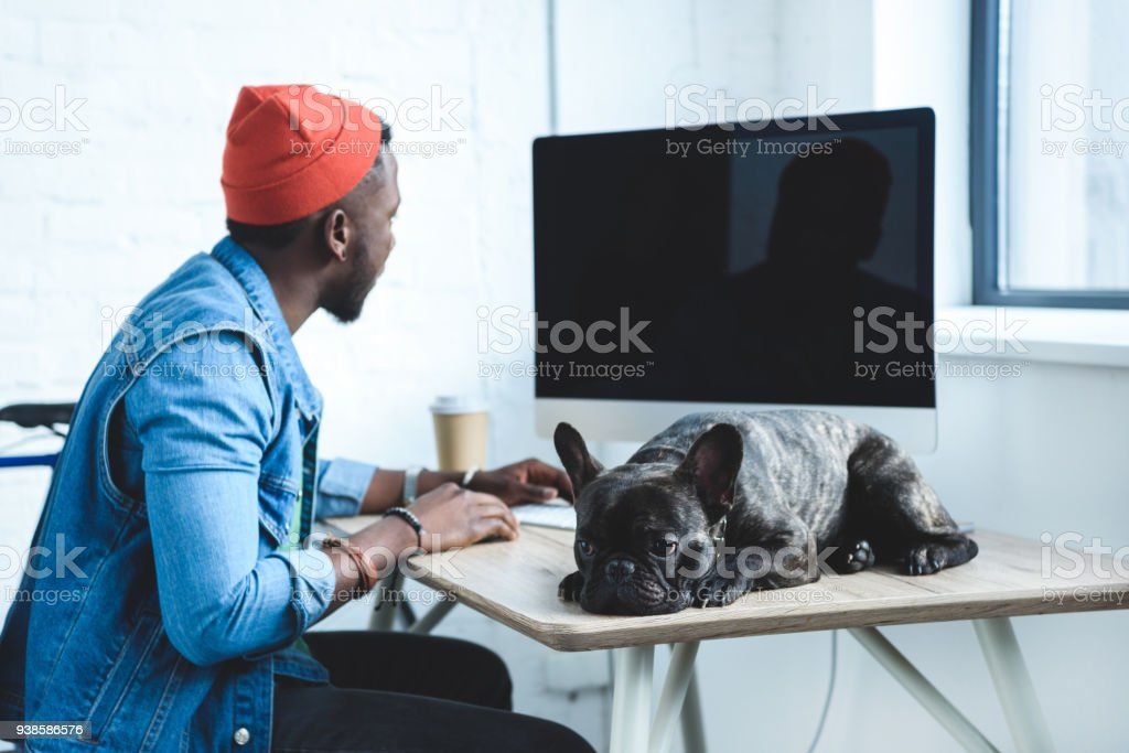 African american man working by computer while French bulldog lying on table stock photo
