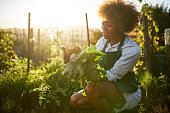 istock african american woman in community garden 934921136