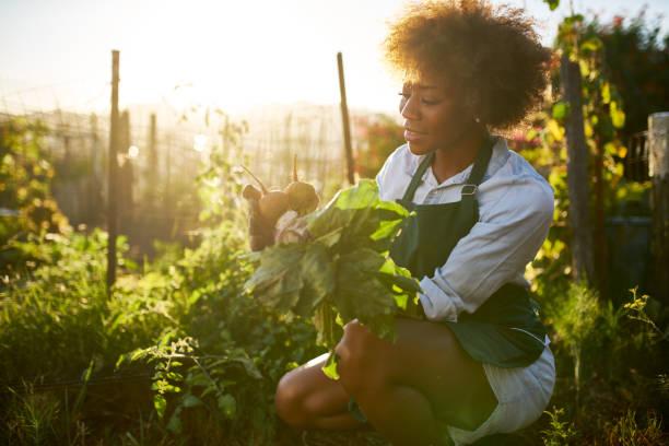 femme afro-américaine au jardin communautaire - jardiner photos et images de collection