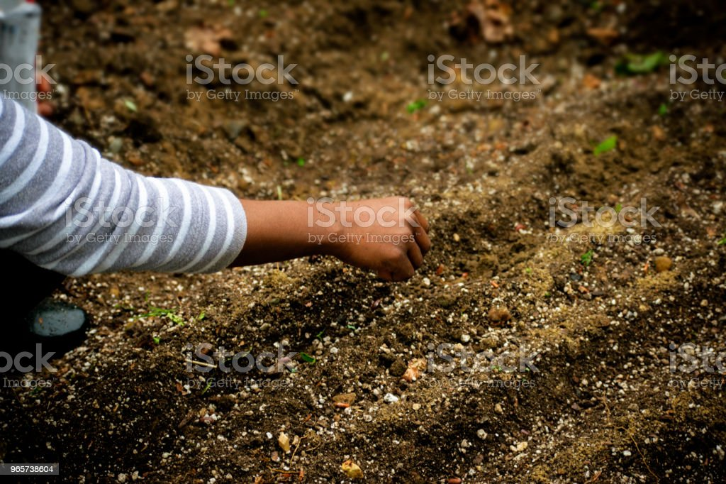 African American Woman in the garden planting rows of beans - Royalty-free African-American Ethnicity Stock Photo