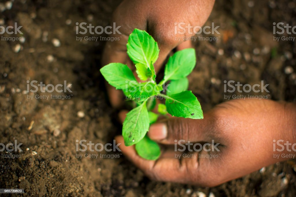 African American vrouw in de tuin planten Tulsi 5 - Royalty-free Afro-Amerikaanse etniciteit Stockfoto