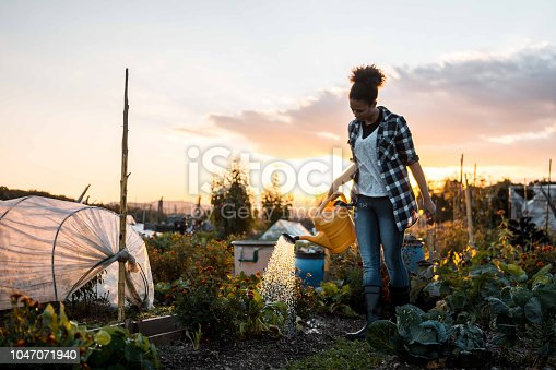 African American woman watering the plants in the garden