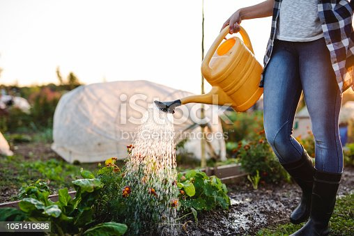African American woman watering the vegetables at sunset