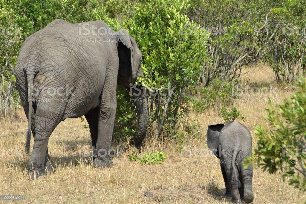 African animal bottoms - elephants stock photo