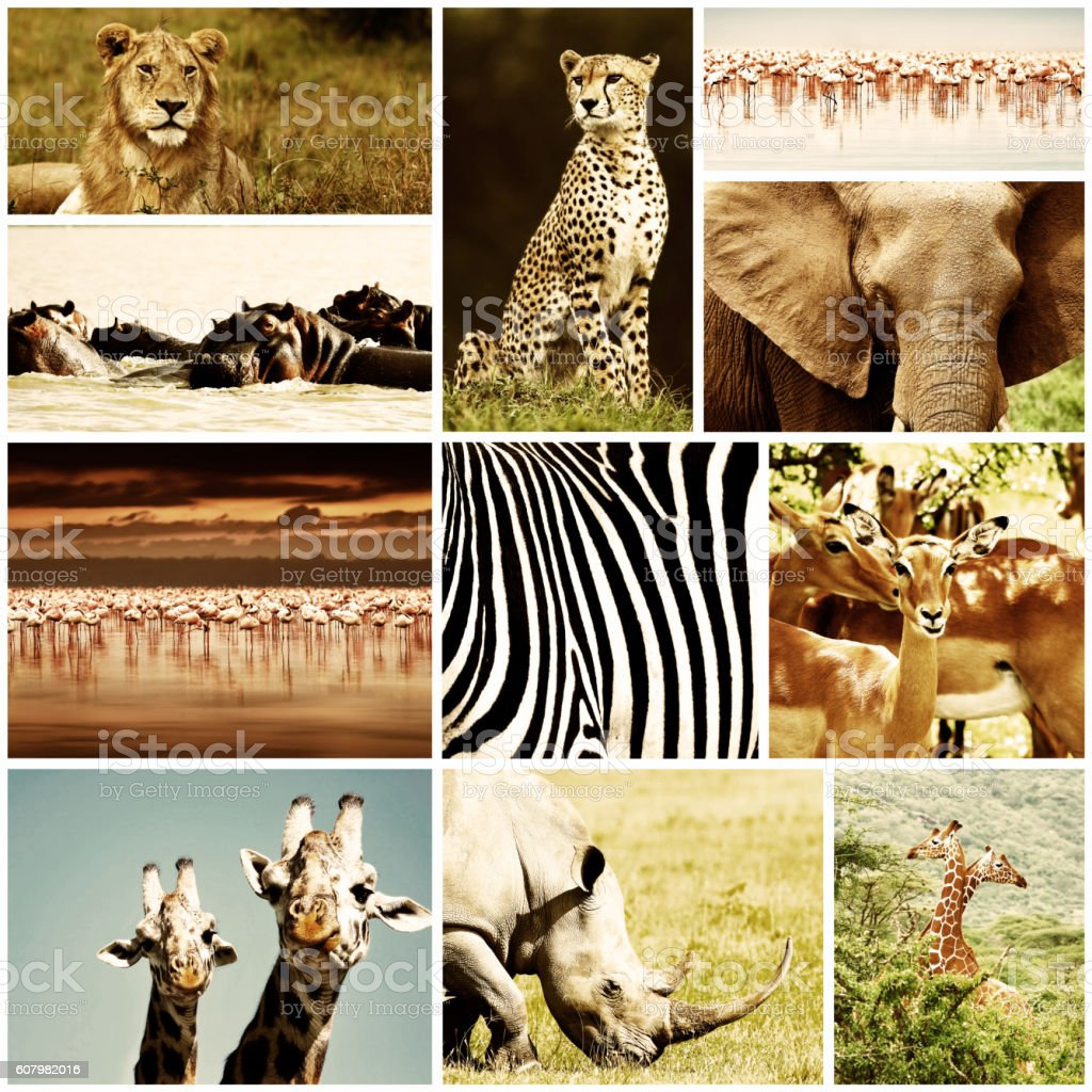 African Animals Safari Collage stock photo