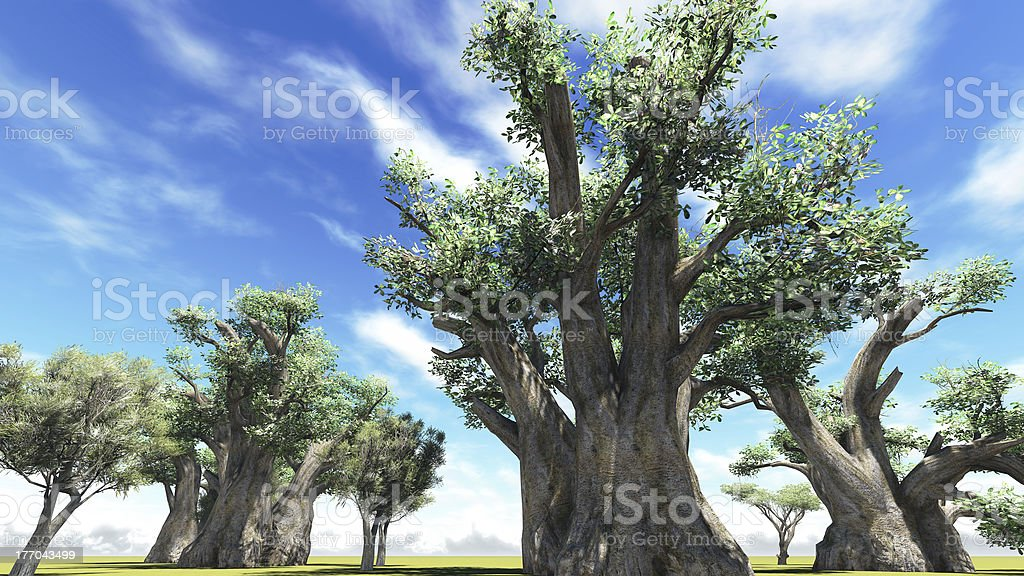 African baobabs royalty-free stock photo