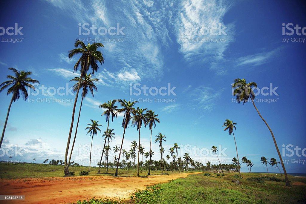 beachroad africano - foto de acervo