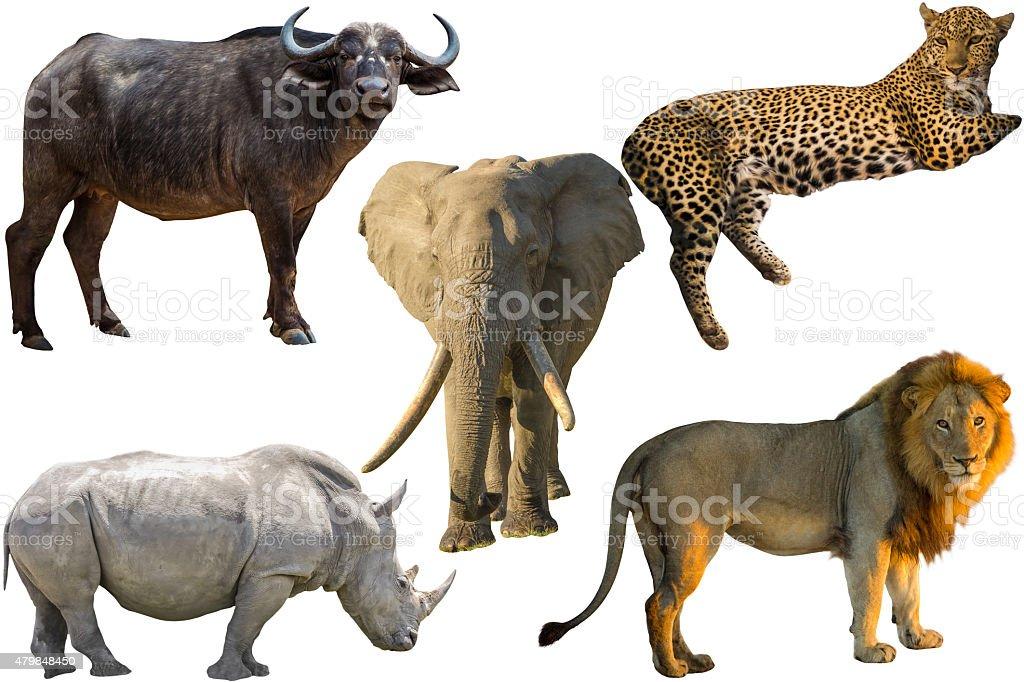 African Big Five stock photo