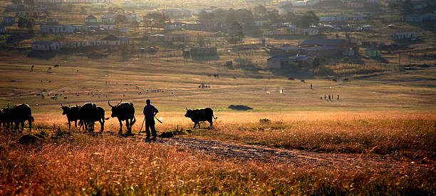 African countryside stock photo