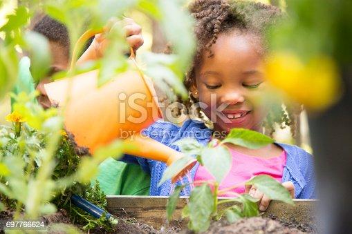 African descent children gardening in outdoor vegetable garden in spring or summer season.  Cute little girl enjoys planting new flowers and vegetable plants.