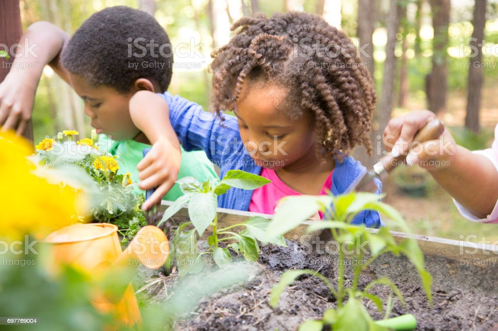 African descent children gardening outdoors in spring. stock photo