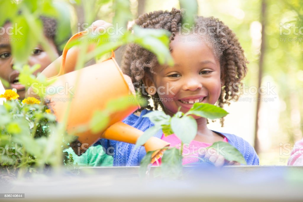 African descent children gardening outdoors in spring. stock photo