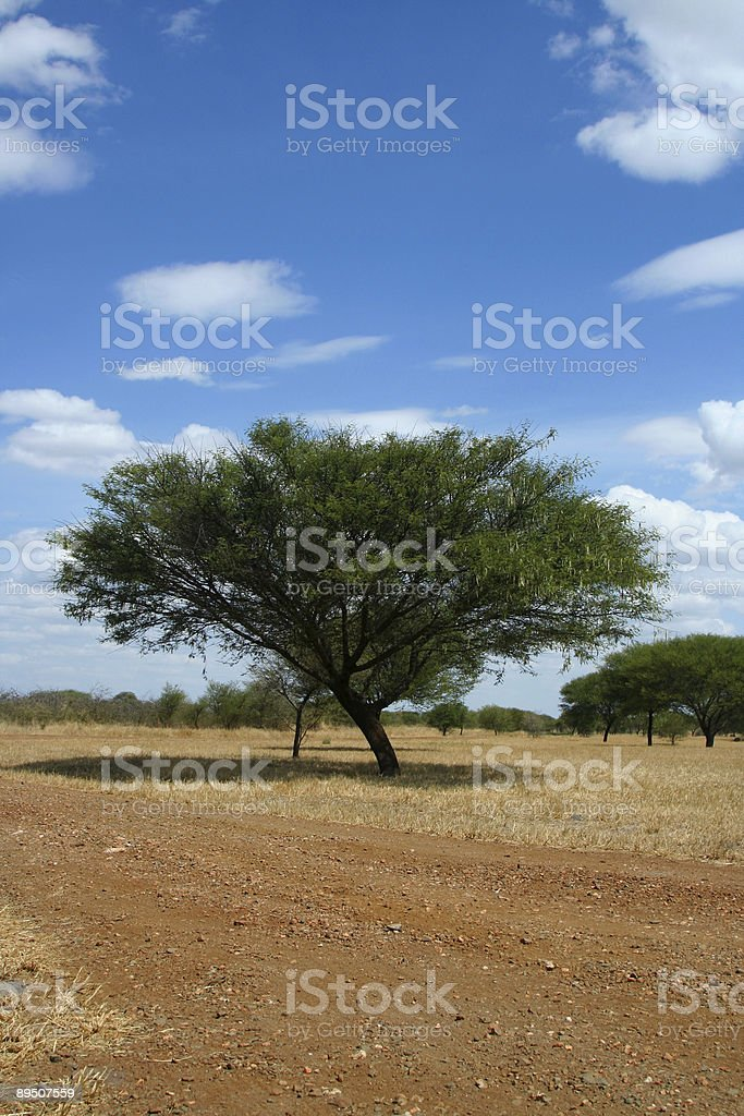 African Dirt Road royalty-free stock photo