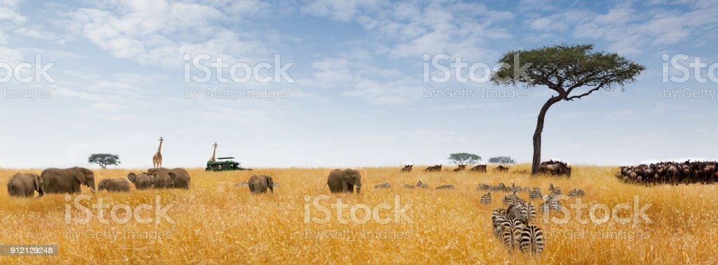 Banner de Web de escena sueño africano - foto de stock