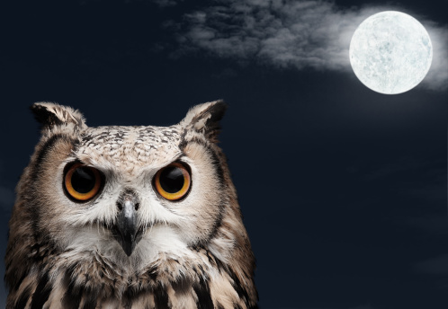 African Eagle Owl lookingtowards the camera at night with moon and clouds